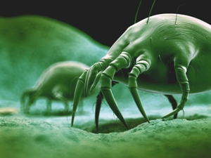 3d illustration of common dust mite 300 225